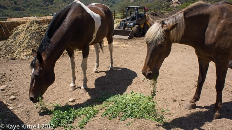 Biodynamic Compost at One Gun Ranch-horses