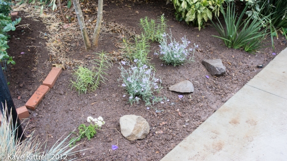 Create an Insectiary! - native plants