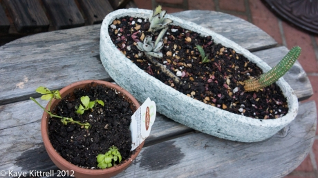 Succulents in Oval Pot