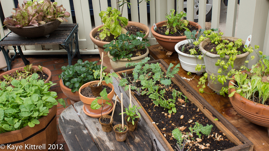 Potted Vegetables on Front Porch, August