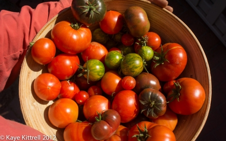 Bowl of Fresh Picked Tomatoes by Kaye Kittrell