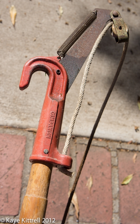 Companion Pruning Tool 2012 by Kaye Kittrell
