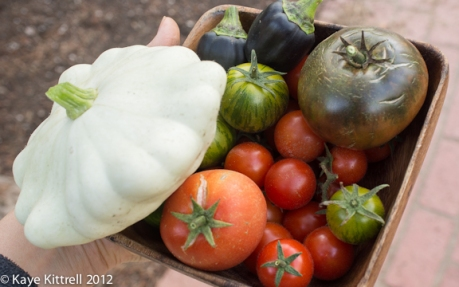 Yesterday's Harvest by Kaye Kittrell