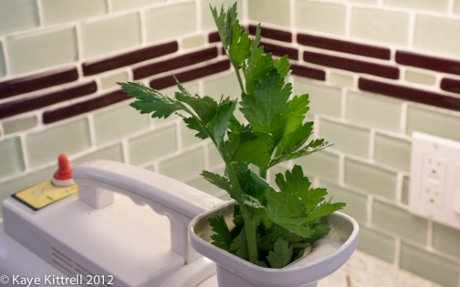 Celery Leaves Going into Juicer