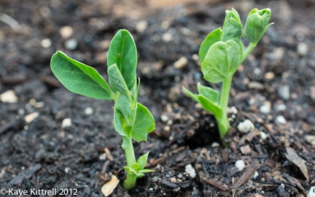 kk_lb-sprouts-17