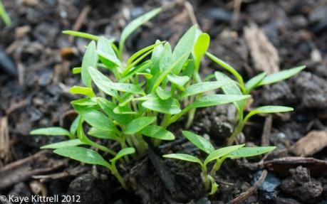 kk_lb-sprouts-23